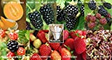 buy Fruit Blacberry Combo Pack Raspberry, Strawberry, Lettuce (Organic) 1150+ Seeds 650327337794 Self Fertile + 8 Free Plant Markers Romaine Thornless now, new 2018-2017 bestseller, review and Photo, best price $6.99