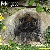 Pekingese Calendar 2018 - Dog Breed Calendar - Premium Wall Calendar 2017-2018