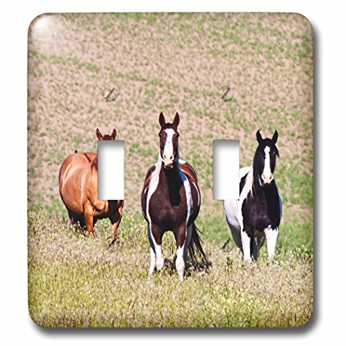 Danita Delimont - Animal - Horses on the hill side - Light Switch Covers - double toggle switch (lsp_231836_2)