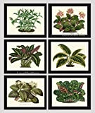 House Plant Print Set of 6 Antique Botanical Art Illustration Beautiful Green Leaf Blooming Flowers Nature Home Room Decor Wall Art Unframed HO