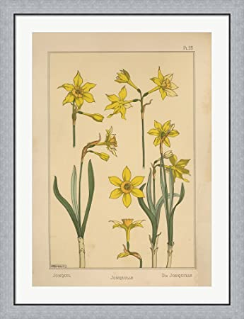 Amazon.com: Plate 28 - Jonquil by Vintage Apple Collection Framed ...
