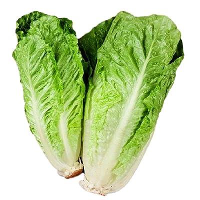 Parris Island Cos Seeds - Lettuce Leaf Heirloom - 4, 000 Seeds Non GMO : Garden & Outdoor