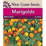 Marigold Seeds - Brocade (approx. 300 seeds)