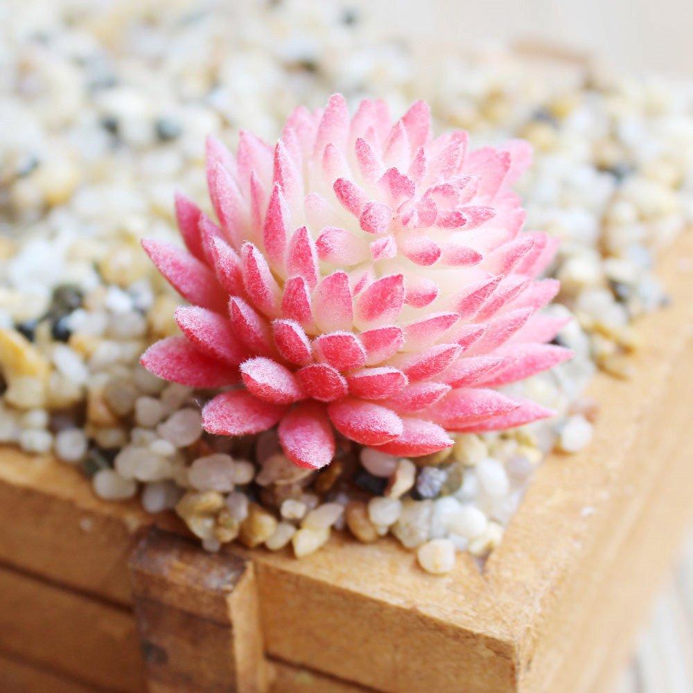 Amazon.com: DLOnline 6 Pcs Artificial Succulent Plants Fake ...