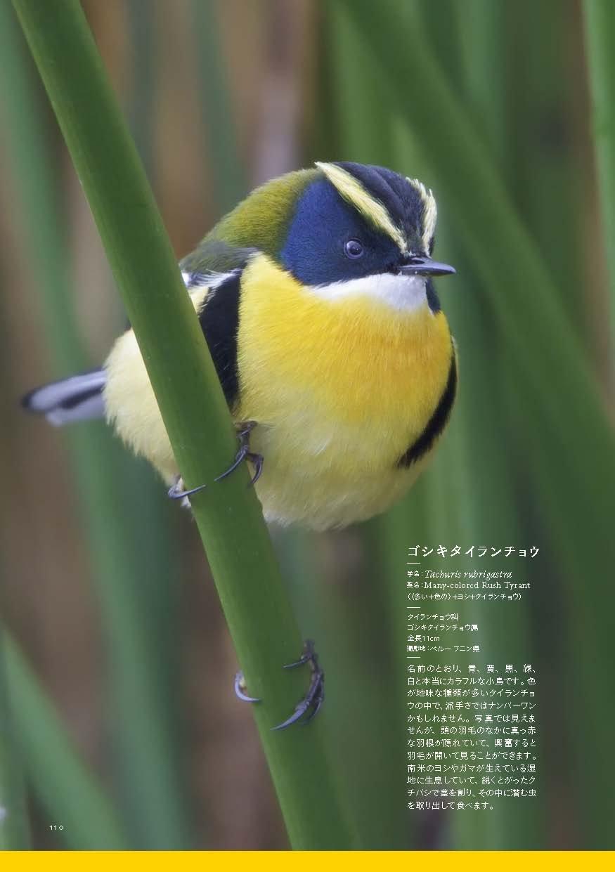 世界の美しい色の鳥 | |本 | 通...