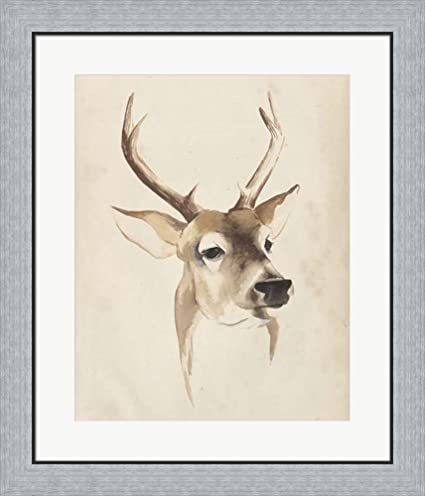 Amazon.com: Watercolor Animal Study IV by Grace Popp Framed Art ...