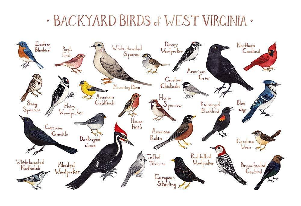 Backyard Common Birds In Virginia - House Backyards