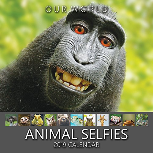 Our World: Animal Selfies 2019 Wall Calendar. Funny Animal Calendar