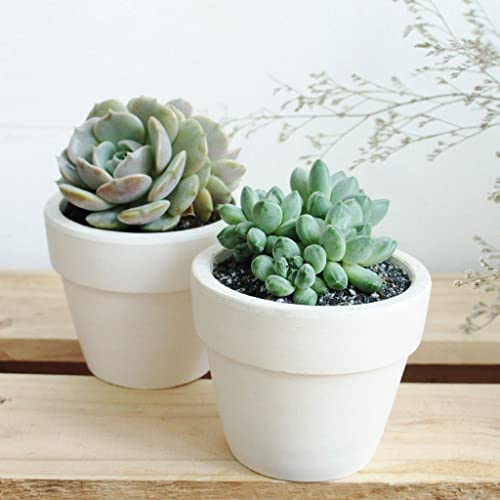 Succulent-Subscription-Boxes