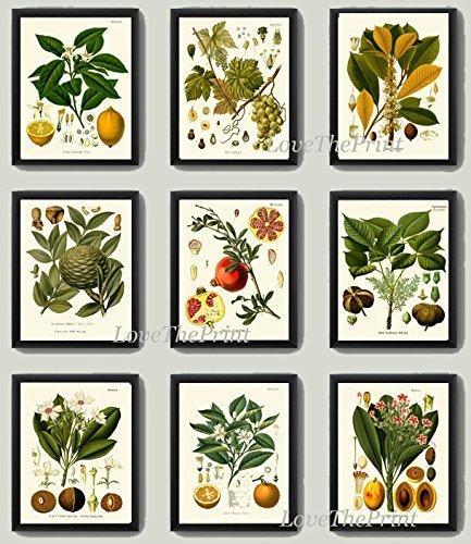 grape leaf poster - 7