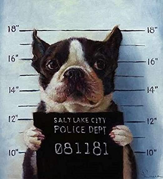 A HOUSE IS NOT A HOME WITHOUT A BOSTON TERRIER WALL HANGING DOG NOVELTY  1