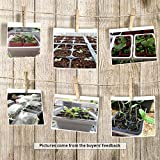 KORAM 10-Pack Seed Started Tray 120 Cells Clear