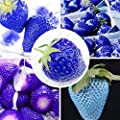 Balcony Fruits Strawberry Seeds Blue Strawberry Seed Delicious Fragaria Ananassa Seed - 200 Pcs