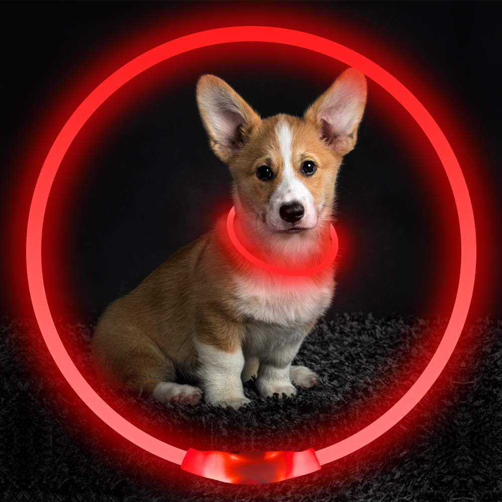 LED Dog Collar Green Fashion Light up Collar for Small Medium Large Dogs Glowing Pet Dog Collar for Night Safety USB Rechargeable