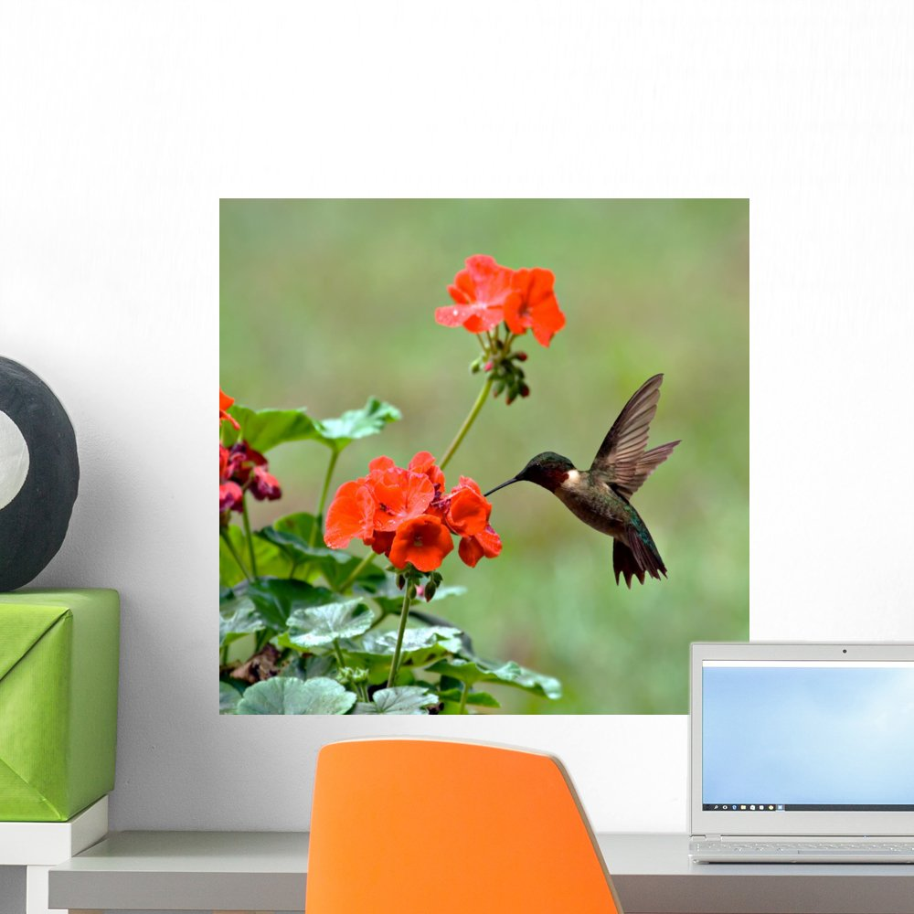 18 in W x 18 in H Wallmonkeys Ruby-Throated Hummingbird Wall Decal Peel and Stick Graphic WM111290