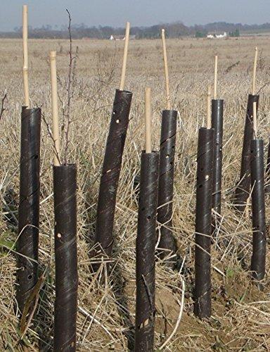 Baumschutz 39 Professioneller Stauden/Setzling Schutz Mit Stange & Binder - Ohne Stöcke & Bänder