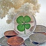 Real Four Leaf Clover Good Luck Pocket Token