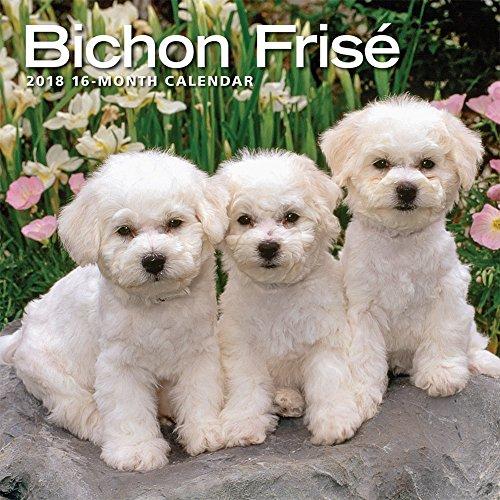 2019 Bichons Wall Calendar free shipping