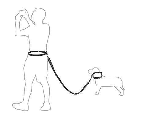 Amazon Com Hollychoice Hands Free Dog Leash Premium Running Dog