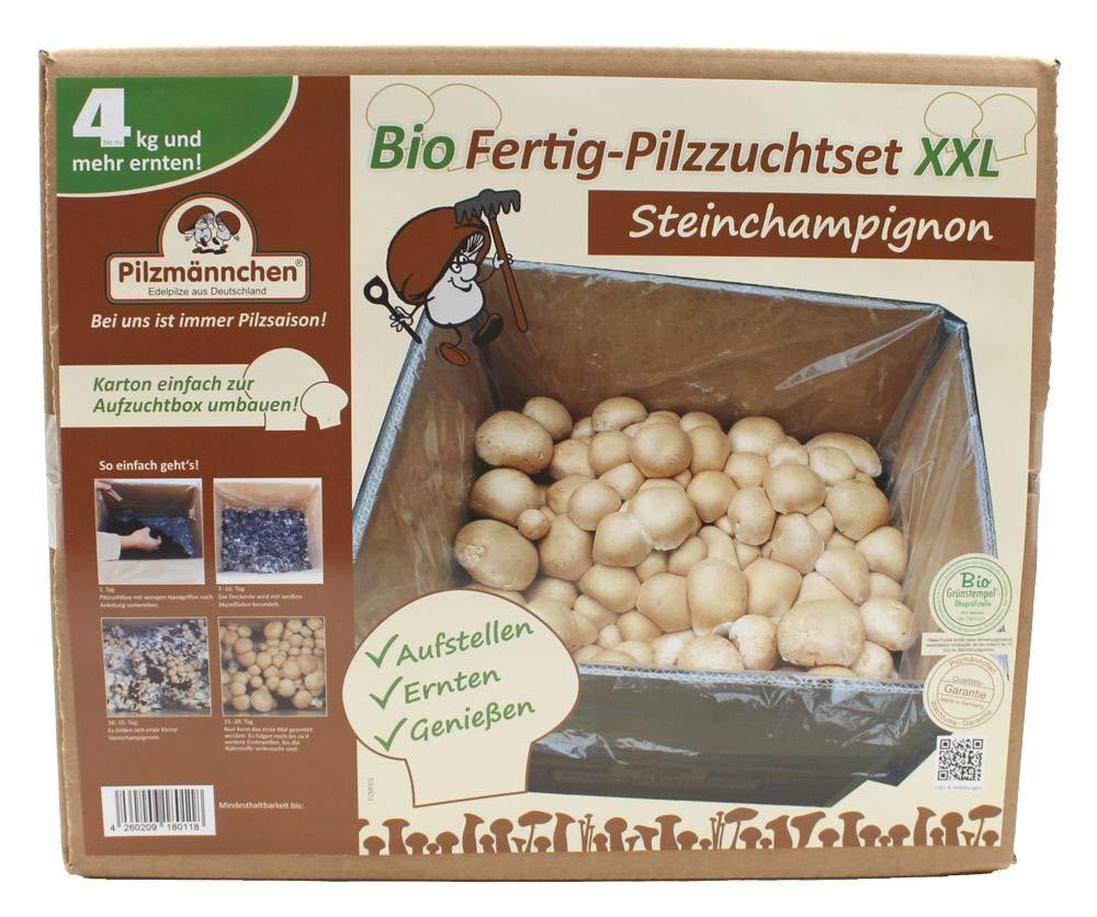 XXL Bio Steinchampignon, komplettes Pilzzuchtset für die eigene Pilzzucht Pilzmännchen