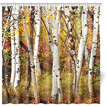 InterestPrint Fall Woodland Shower Curtain, White Fall Birch Trees With  Autumn Leaves Growth Wilderness Ecology