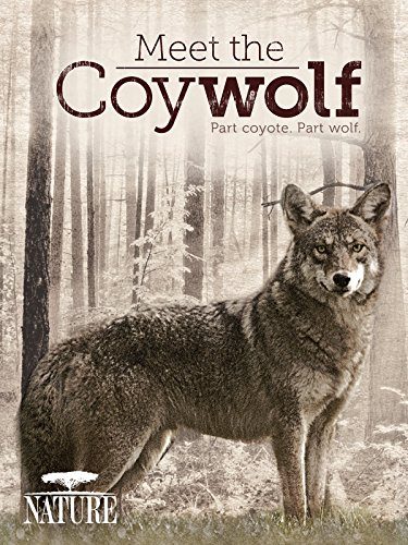 (Meet the Coywolf)