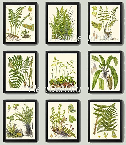 Botanical Set of 9 Prints Antique Beautiful Fern Green Forest Nature Home Room Decor Wall Ferns Art Unframed ()
