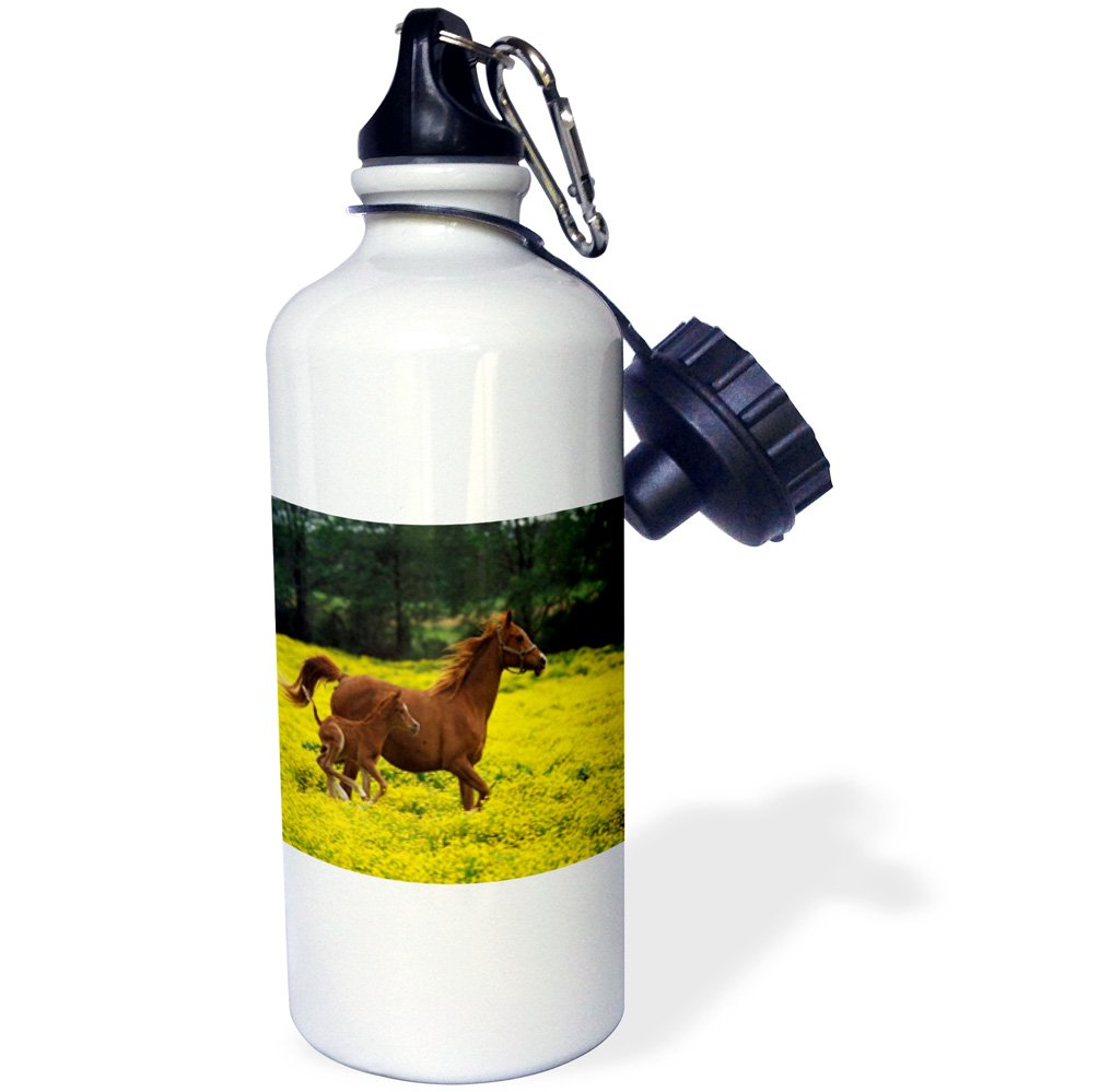 White 3dRose wb/_80234/_1Arabian Mare And Foal Horses Sports Water Bottle 21 oz