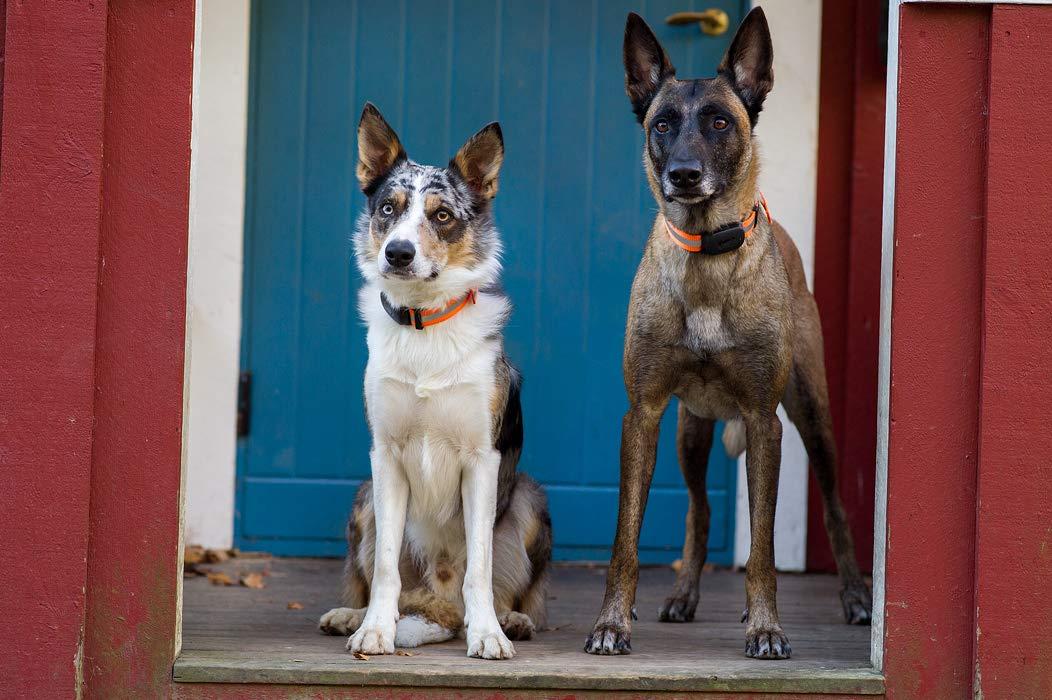MiniFinder atto GPS Tracker per animali domestici