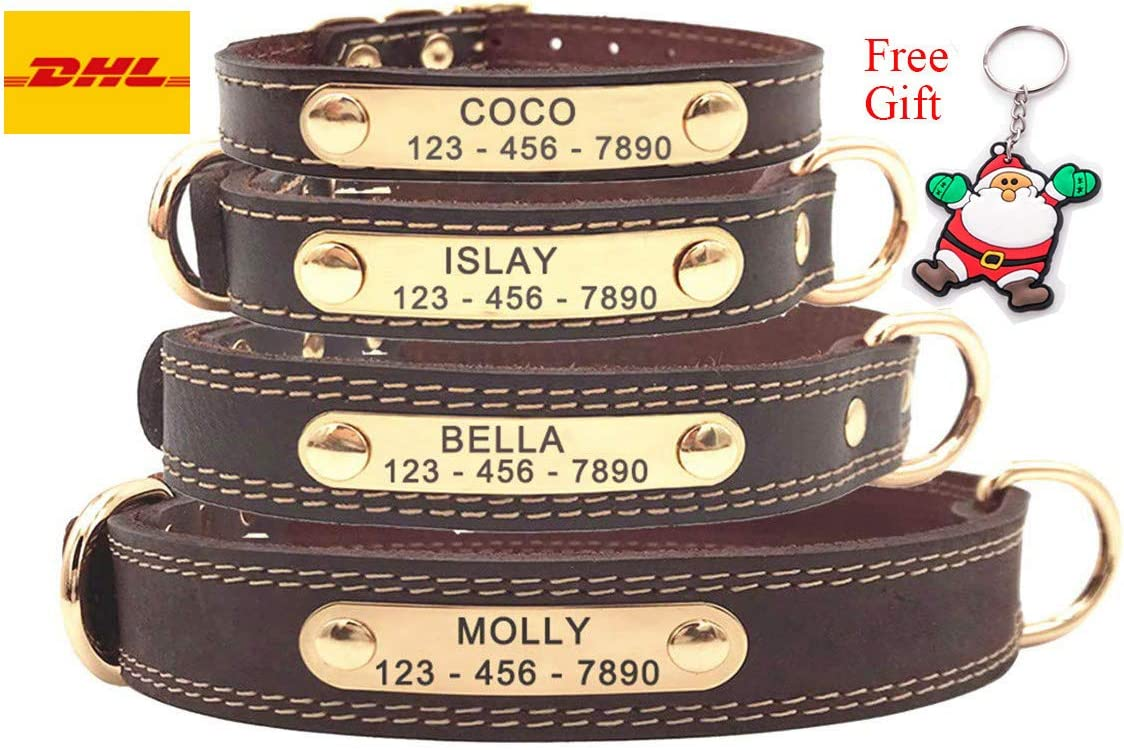 Top 10 Dog Collars | 2020 Updated Review 4