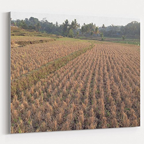 Westlake Art - Grass Grain - 16x20 Canvas Print Wall Art - Canvas Stretched Gallery Wrap Modern Picture Photography Artwork - Ready to Hang 16x20 Inch (8551-1AA57)
