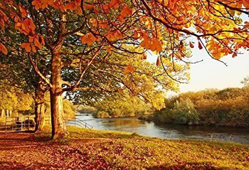 Yeele 9x6ft Autumn Photography Background Fall Fallen Leaves Yellow Red Maple Landscape River Forest Path Outdoor Scene Photo Backdrops Pictures Adult Artistic Portrait Photoshoot Props