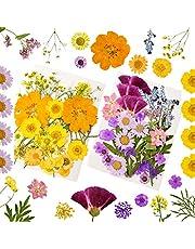YMHPRIDE 80 stycken naturliga torkade pressade blommor, blandade flera torkade blomblad kronblad för gör-det-själv ljus harts smycken nagelhänge hantverk tillverkning konst blommiga dekorer