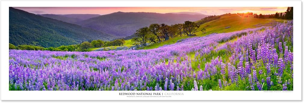 Vista Point Studio Gallery Award Winning Landscape Panoramic Art Print Poster: Redwood National Park