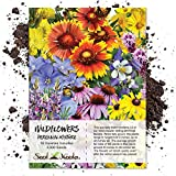 Package of 3,000 Seeds, Perennial Wildflower Mixture (100% Pure Live Seed) Non-GMO Seeds by Seed Needs