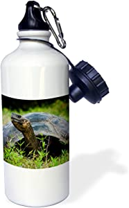 3dRose Ecuador, Santa Cruz Island Galapagos Giant Tortoise Sports Water Bottle, 21Oz, Multicolored