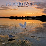 Florida Nature 2019 12 x 12 Inch Monthly Square Wall Calendar with Foil Stamped Cover, USA United States of America Southeast State Nature