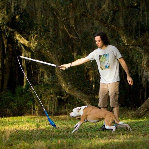 Flirt stick for dogs [PUNIQRANDLINE-(au-dating-names.txt) 51