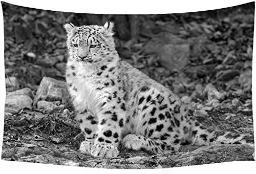 Leopard snow leopard sitting watch ground nature stones cute Animals – Wall Tapestry Art For Home Decor Wall Hanging Tapestry 60×40 Inches Black and White