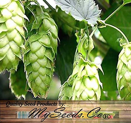 HOPS Seeds with 10 x Each of Cascade & Centennial Rhizomes - Humulus lupulus Bundle - Brew Your OWN BEER - Zones 3-8 - By Oakland Gardens (Hops Seeds with 10 each Cascade Centennial)
