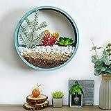 JUYOU Morden Round Indoor Wall Succulent Hanging