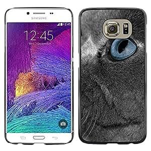 TopCaseStore / la caja del caucho duro de la cubierta de protección de la piel - Scottish Fold Grey Russian Blue Eye Cat - Samsung Galaxy S6 SM-G920