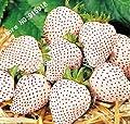 Mr.seeds Fruit seeds 100 pcs White Snow Alpine Strawberry Fragaria Vesca Fruit Fresh Exotic Seeds