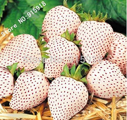 Alpine Strawberry - Mr.seeds Fruit seeds 100 pcs White Snow Alpine Strawberry Fragaria Vesca Fruit Fresh Exotic Seeds