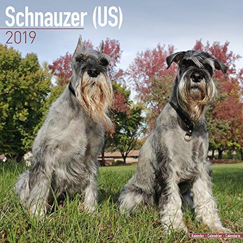 Schnauzer (US) Calendar - Dog Breed Calendars - 2018 - 2019 Wall Calendars - 16 Month by Avonside