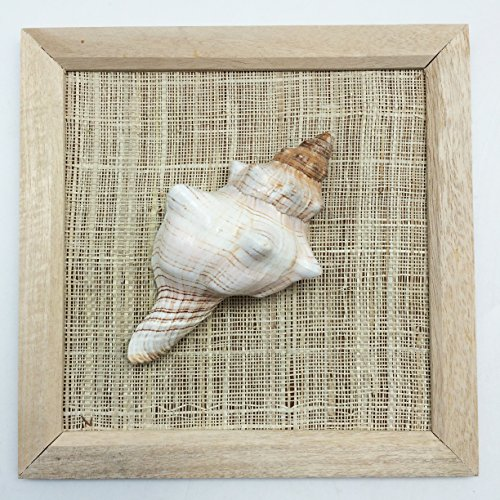 PEPPERLONELY 8x8 Inch Wood Framed Fox Shell, Sea Shell Art Wall Décor