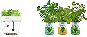 Back to the Roots Water Garden Betta Fish Tank + Garden in a Can Kitchen Herb Variety 3 pack Basil/Cilantro/Mint
