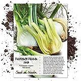 Seed Needs, Florence Fennel Herb (Foeniculum vulgare) 700 Seeds