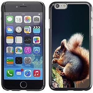 Be Good Phone Accessory // Dura Cáscara cubierta Protectora Caso Carcasa Funda de Protección para Apple Iphone 6 Plus 5.5 // Cool Squirrel
