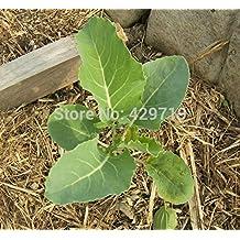 200/BAG Cauliflower seeds - ORANGE HEAD ~CHEDDAR~ Bright orange heads. vegetable cabbage seeds for home garden